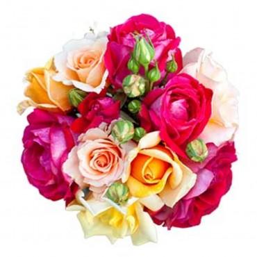 Dream of roses