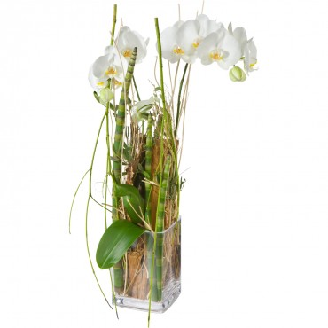 Enchantment (orchid plant incl. vase)