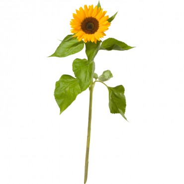 A Small Sun (1 sunflower)