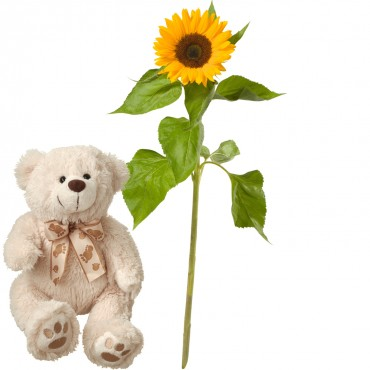 A Small Sun (1 sunflower) with teddy bear (white)