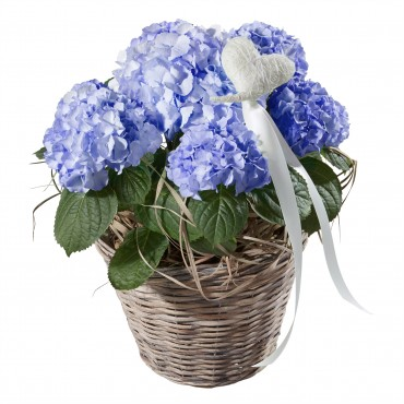 Hydrangea (blue) with Heart