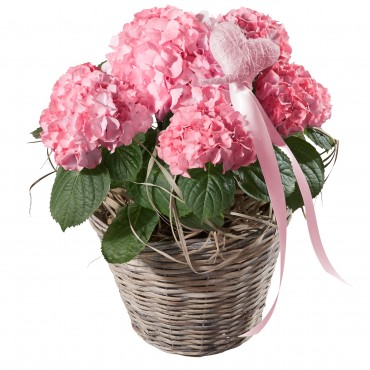 Hydrangea (pink) with Heart