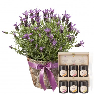 Scented Summer Greeting with honey gift set