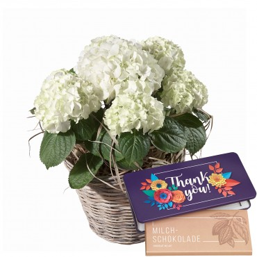 "Hydrangea (white) with bar of chocolate ""Thank you"""