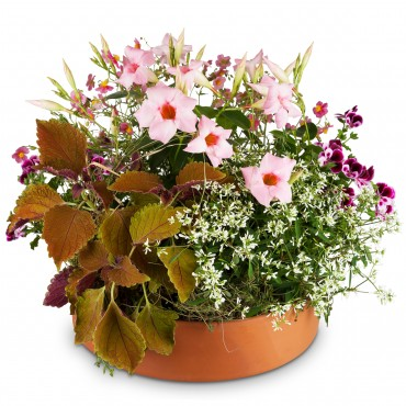 Loving Outdoor Flower Bowl