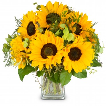 Sunflowers Pure