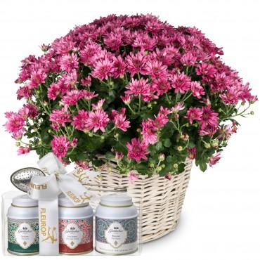 Chrysanthemum (pink) in a basket with Gottlieber tea gift set