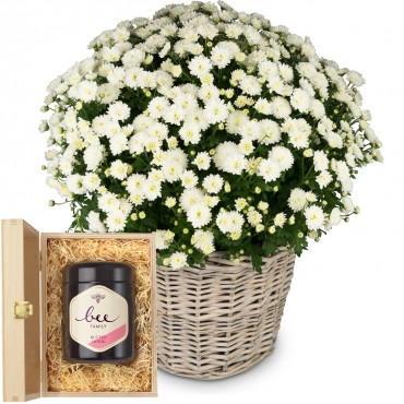 Chrysanthemum (white) in a basket with Swiss blossom honey
