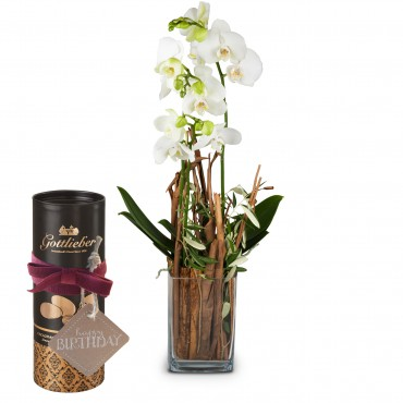 Enchantment (orchid with vase) with Gottlieber cocoa almonds and hanging gift tag «Happy Birthday»