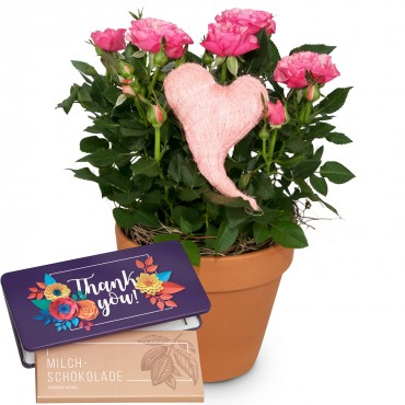 Heartfelt Surprise (rose plant with heart) with bar of chocolate «Thank you»