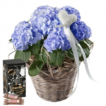 Hydrangea (blue) with Heart and Minor Split in trendy gift tin