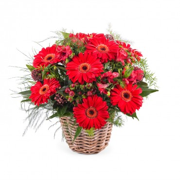 Basket Arrangement of Gerbera Daisies