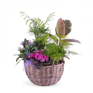 Centrepiece of Plants