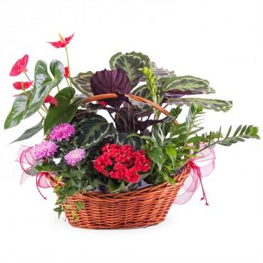 Centrepiece of Premium Plants