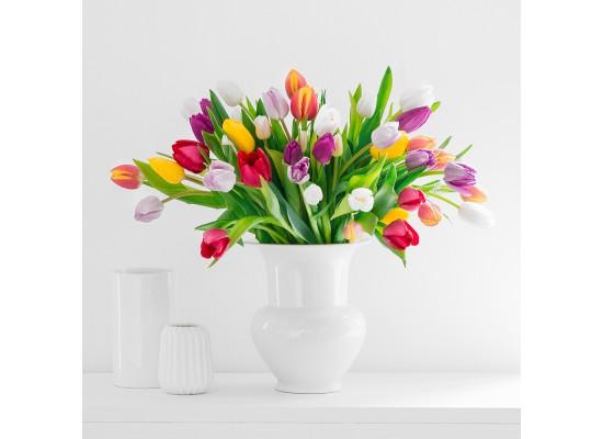 Ty největší zajímavosti o tulipánech