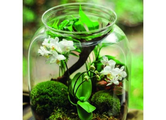 Interiérová rostlinná terária