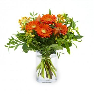 Splendid In Orange